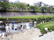 子供たちは勇んで,川の生物調査に