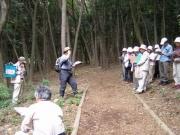 間伐した林の植物相