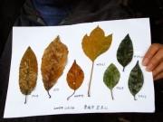 落ち葉の標本