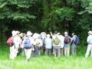 河畔林の昆虫解説