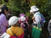 秋の実りの果実を観察