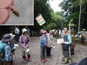 モリチャバネゴキブリの解説