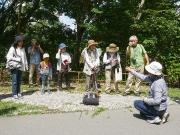 沖野で採取した草本