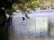 朝倉川に住む生き物を身近に観察(水温19.2℃)