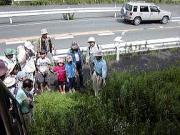 路傍に咲くネジバナの説明