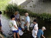 朝倉川の生き物たちを調べました