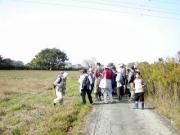 畑ではもう、春の七草の内セリ、ナズナ、ハコベラ、ホトゲノザの4種類を見つけることが出来ました