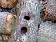 本堂脇に置かれたかってのムササビの巣