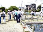 トンボ公園での水生植物の解説