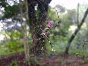 権現の森のジョロウグモ