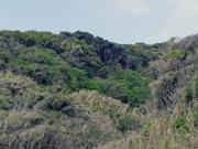 東七根海岸の崖森