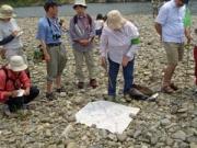 川原の石の分類、ここはいろいろな石が見つかります