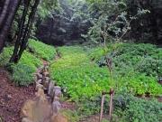 アジサイの谷の風景