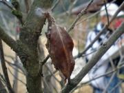 木の葉を上手に使ったミノムシ