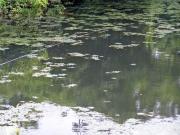 岩崎さんの竿と鳴子沢池の水面
