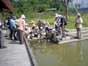 修景庭園水辺デッキでヤゴの観察