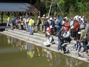 修景池でのカルガモの観察