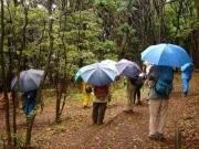 雨の雑木林の観察