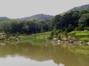 定点観測の修景池 4月に比較して緑が増えてきた。