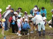 修景池での水生生物観察