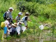修景池でのトンボの観察