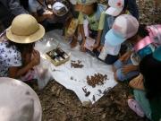 セミの抜け殻調査 アブラゼミ、ニイニイゼミが多かった
