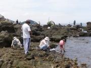 磯浜の生きもの採集