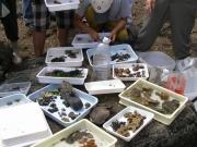 採集された磯浜の生きもの