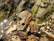 カモメガイが開けた軟らかい岩石