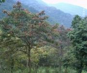大原調整池周辺の森
