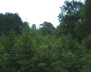 蛤岩周辺の現在の森