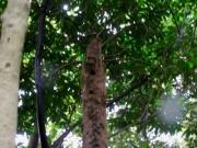 朽ちた樹木のコゲラの巣穴