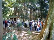 腹浅間での巨木の説明