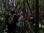 マダケの茂る河畔林を歩く