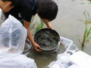 水辺で水生生物を探そう