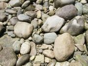 地質の異なる石ころが混在する河原