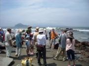 神島の見える磯で海草の説明