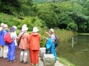 滝頭上池でトンボの解説