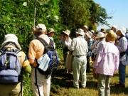 河畔林のマント植物の解説