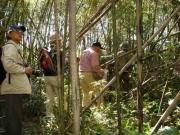 台風18号で荒れた河畔林の竹やぶ
