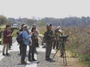 ヨシ原と河畔林の野鳥観察