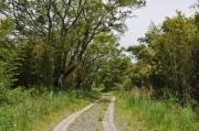 河畔林内の景観