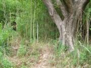 河畔林のホテイチク