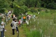 修景池の水辺でトンボ狩り