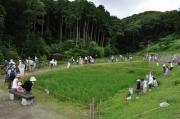水田でのトンボ採集
