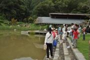 修景池での生きもの観察