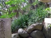竹島の林床を優占するキノクニスゲ