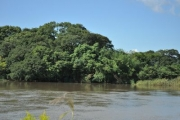 水位の上昇した豊川