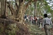 財賀寺の森林植生の解説