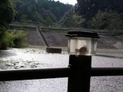 原田会員が事前に公園の池から釣り上げました